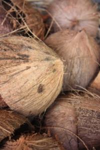 hela_kokosnötter_närbild